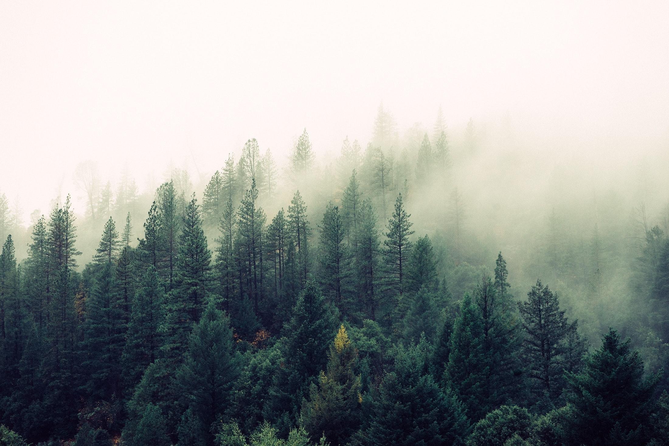 Naturen är ett vanligt tema